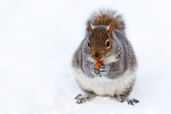 How To Keep Squirrels Out Of Garden